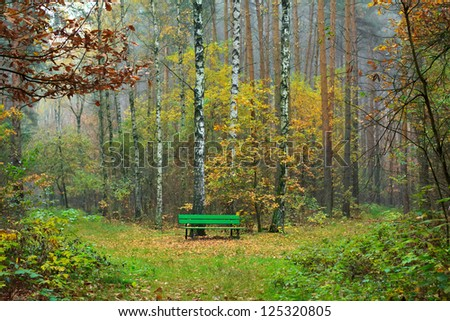 A bench in the autumn forest - stock photo