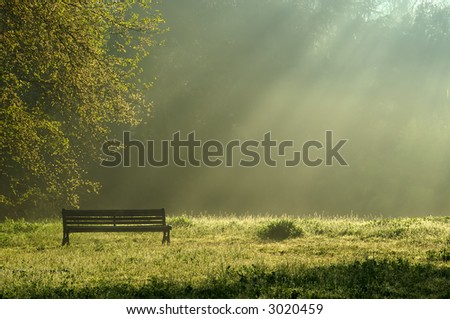 A bench in the park in the early morning light