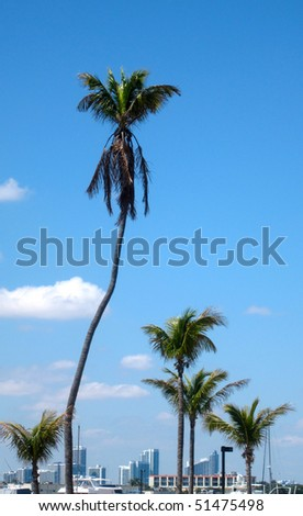A bending palm tree by a pier in Florida