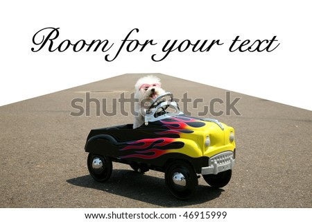 a bichon frise dog drives her hot rod pedal car around town on the road with a vanishing point on white, with room for your text or images - stock photo
