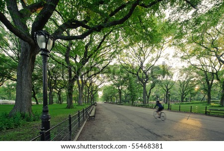 A bicyclist in Central Park (The Mall) in the morning.