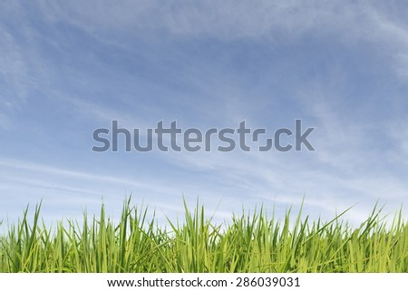 A big blue sky with a few white clouds. It is a sunny day.  - stock photo