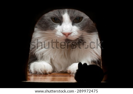A big cat waits for the mouse to come out from his hole in the wall where he is hidden. - stock photo