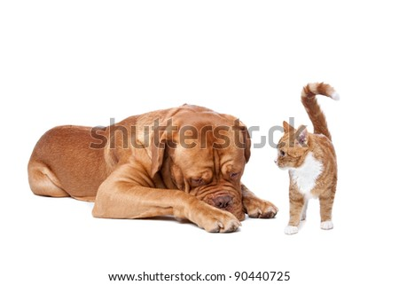 A big dog and a small cat in front of a white background