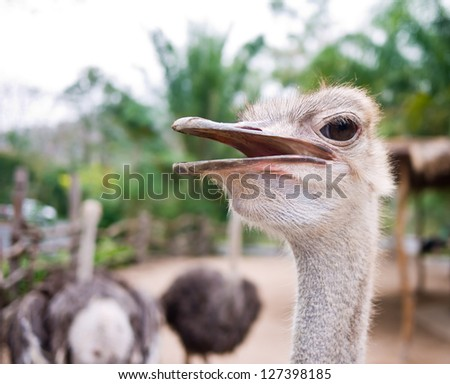 A big eyes ostrich with his mouth open - stock photo