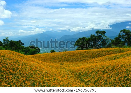 A big field with a lot of yellow flowers.