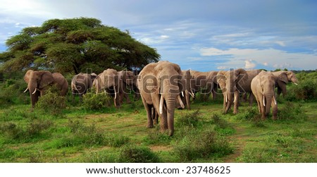 A big herd of elephants in the wild - stock photo
