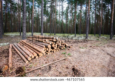 A big pile of wood in a forest road.
