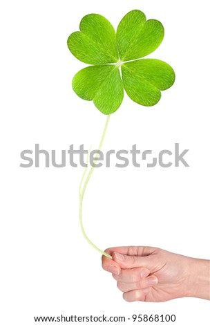 a big shamrock hold in hand - stock photo