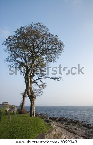 A big tree beside a rocky shore with a mist in the background