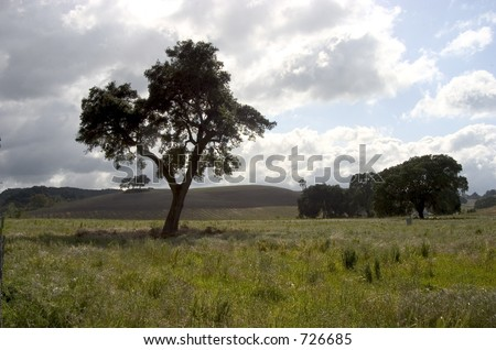 A big tree in a beautiful green meadow. - stock photo