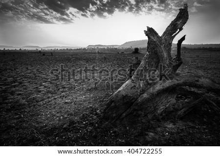 A big tree no life. - stock photo