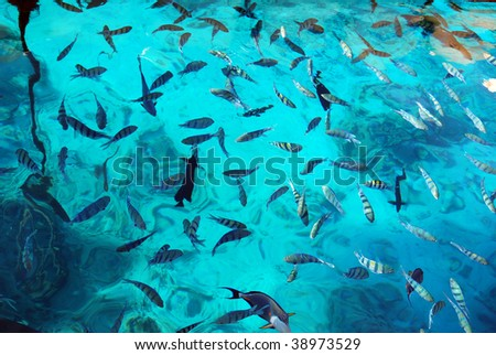 A big variety of Red Sea fishes swiming underwater in a crystal clear water