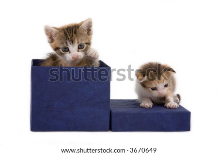 a bigger and a smaller kitten on a gift box - stock photo