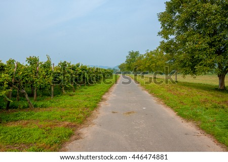 A bike path next to the vineyards. Germany. The left of the road grow grape vines the right of the road the trees grow. The Moselle wine region. - stock photo