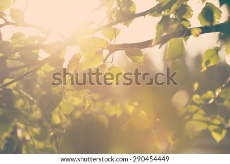 A birch leaves against the sunset with a small spider web. Image has a strong vintage effect to create some artistic angle. - stock photo