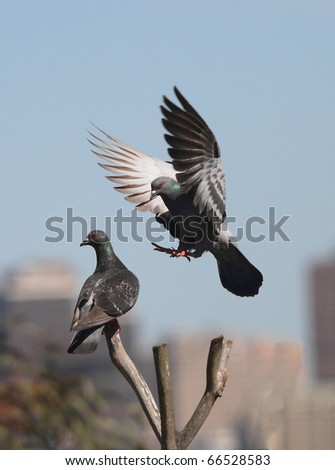 A bird approach to land in the tree trunk. - stock photo