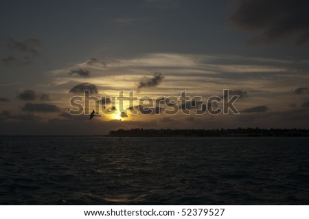 A bird at sunset on a cloudy sky above Gulf of Mexico - stock photo
