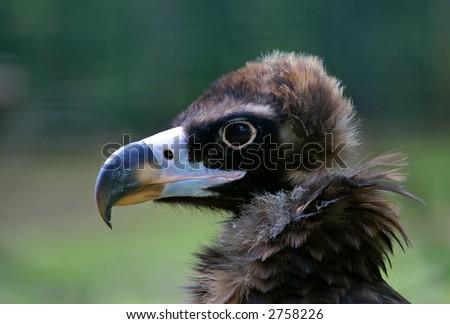 A bird of prey - stock photo