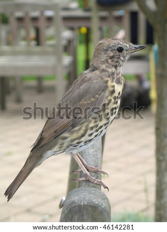 A bird on a bench - stock photo