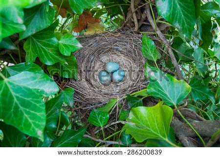 A bird's nest with three eggs - stock photo