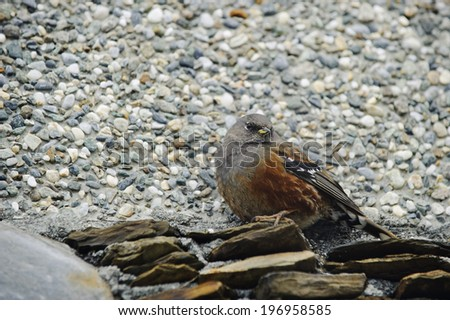 A bird sitting on rocks and on pebbles.