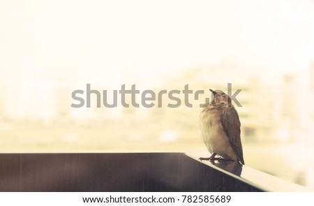 A bird sitting on the balcony