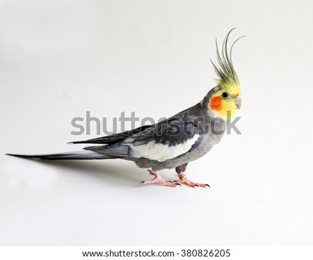 A bird standing on a white background
