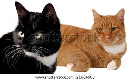 A Black and a Red cat against white background