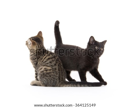 A black and tabby kitten isolated on white background - stock photo