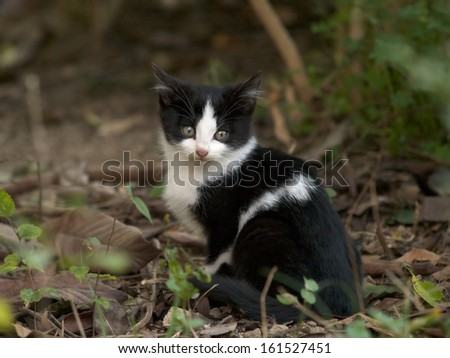 A black and white cat looking back in a forest. - stock photo