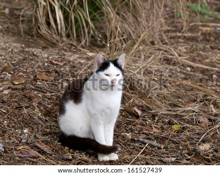 A black and white cat sitting in a field. - stock photo