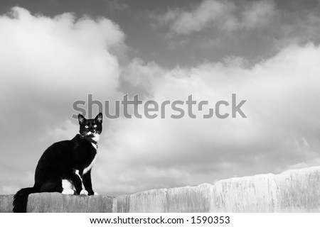 A black and white cat sitting on a wall. - stock photo