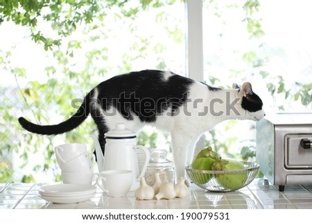 A black and white cat standing on a counter top. - stock photo
