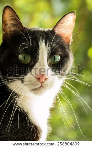a black and white cat with green background