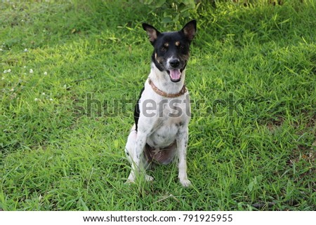 a black and white dog on the green  grass