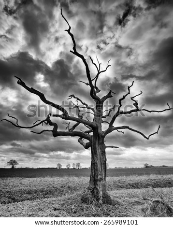 A black and white high definition photograph of a lone tree in a large field under