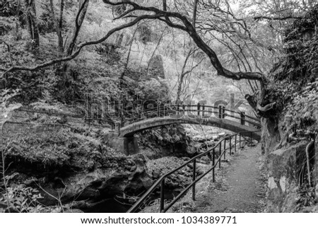 A black and white infrared image of a bridge over a river surrounded by nature
