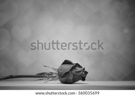 A black and white vintage image beautiful dry rose on blur heart bokeh background - stock photo