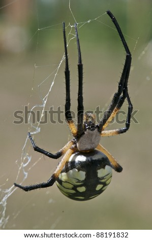 A Black and Yellow Garden Spider on it's web - stock photo