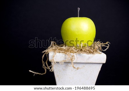 A black back ground with a green apple sitting in a flower pot. - stock photo