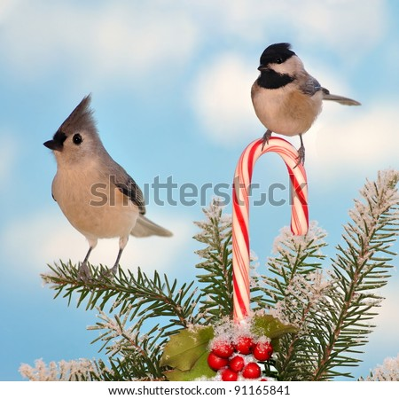 A Black- capped Chickadee and a Tufted Titmouse at a festive candy cane. - stock photo