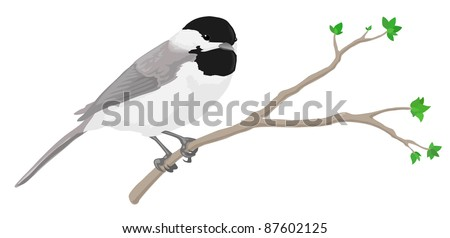 A black-capped chickadee perched on a branch. Raster - stock photo