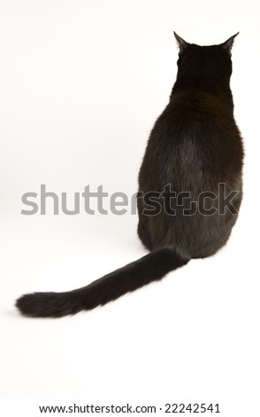 A black cat isolated on a white background. - stock photo