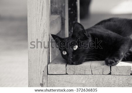 A black cat lies and looks away