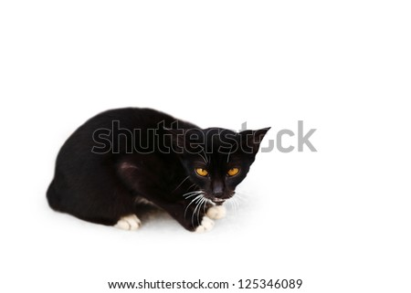 A black cat with an orange color eye, isolated against white. - stock photo