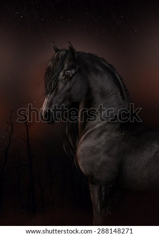 A black Friesian horse in the dark of night with a faint glow of stars and the hint of dawn.
