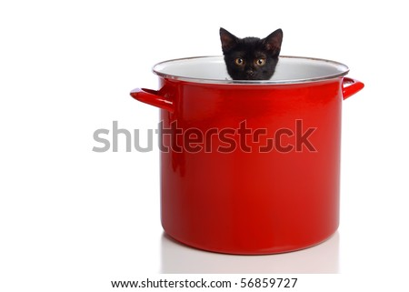 A black kitten in a large, red cooking pot. - stock photo