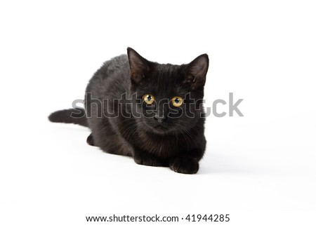 a black kitten on a white background