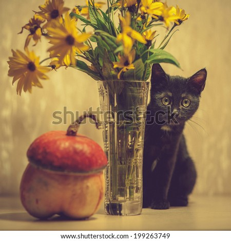 A black kitten peeks out from a vase with flowers. Pumpkin near a vase. - stock photo